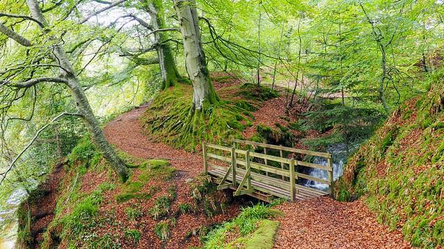Autumnal Walk 2.