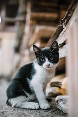 Sad kitten looking cautious