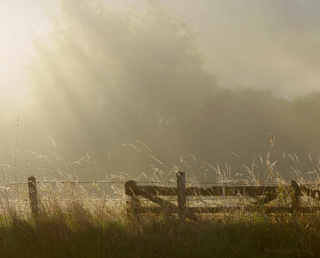Misty sunrise fence