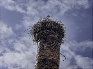White stork on an inclined curved chimney | by Luc V. de Zeeuw