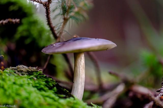 Ein Pilzlein steht im Walde
