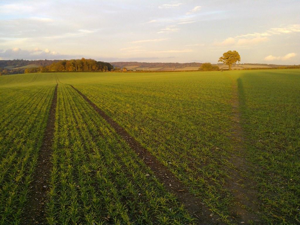 Field on Remenham Hill Henley via Hambleden walk