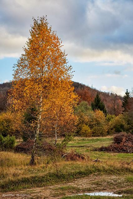 Jesen u šumi (4)