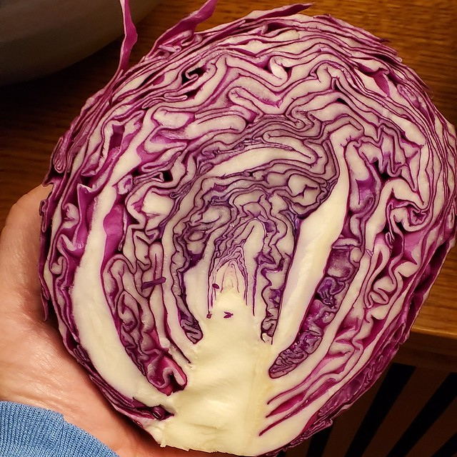 our beautiful cabbage