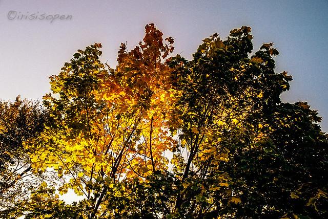 Herbstsonne # 012A # Nikon F3 Kodak Portra160 2013