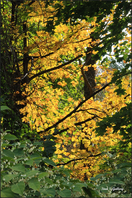 Autumn Foliage 2019 - 7