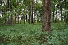 Jackson Gunn Nature Reserve