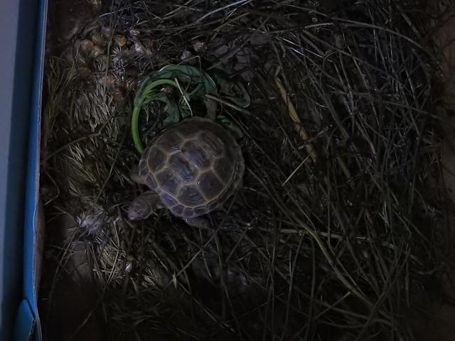 カメ Turtle
