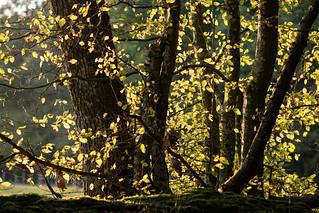 Normandie - Autumn