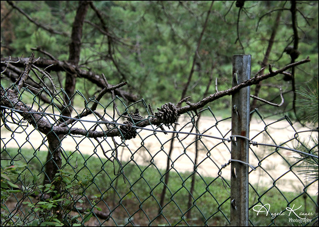 Happy Fence Friday...