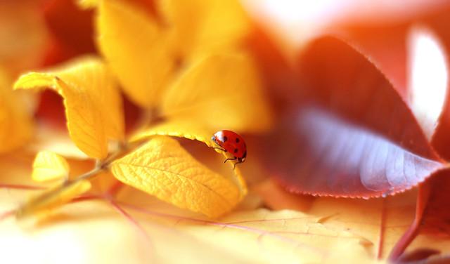 ...It is autumn