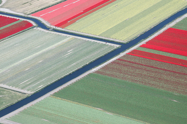 Tulip fields from the air, Netherlands