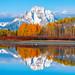 American White Pelican: Fuji GFX 100 Grand Teton National Park Autumn Colors & Snow! Fall Foliage Wyoming Aspens Elliot McGucken Fuji GFX100 Fine Art Landscape & Nature Photography!