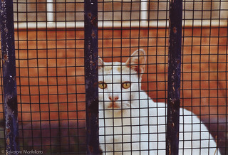 Cat behind grid