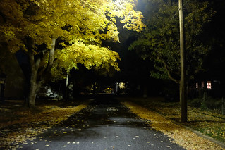 Fall color at night in my neighborhood