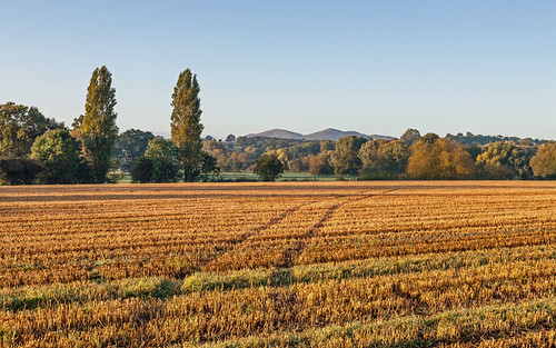 Autumn in Worcestershire