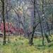 Cumacatta Wood, Borrowdale