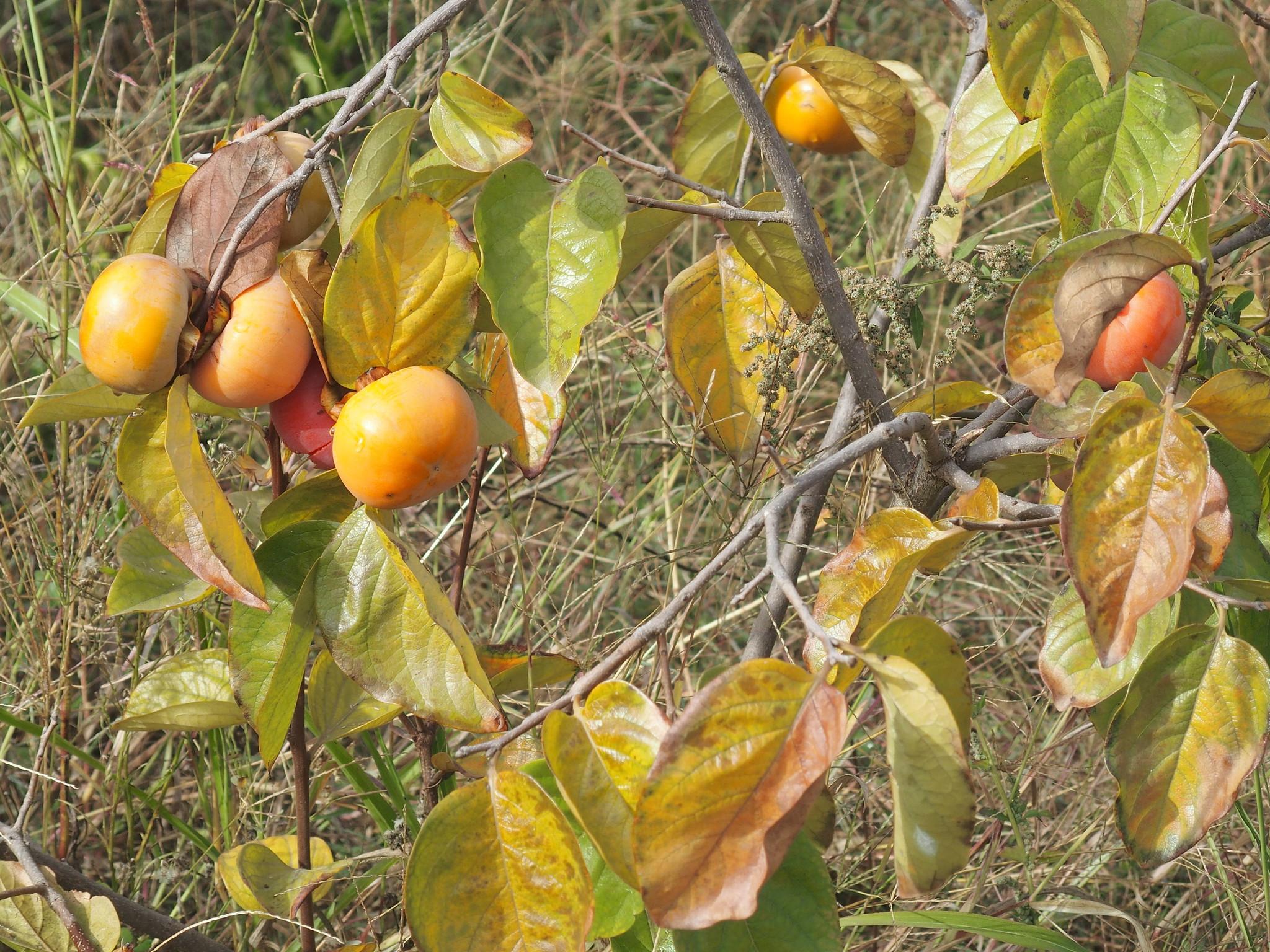 A4 Okänd frukt