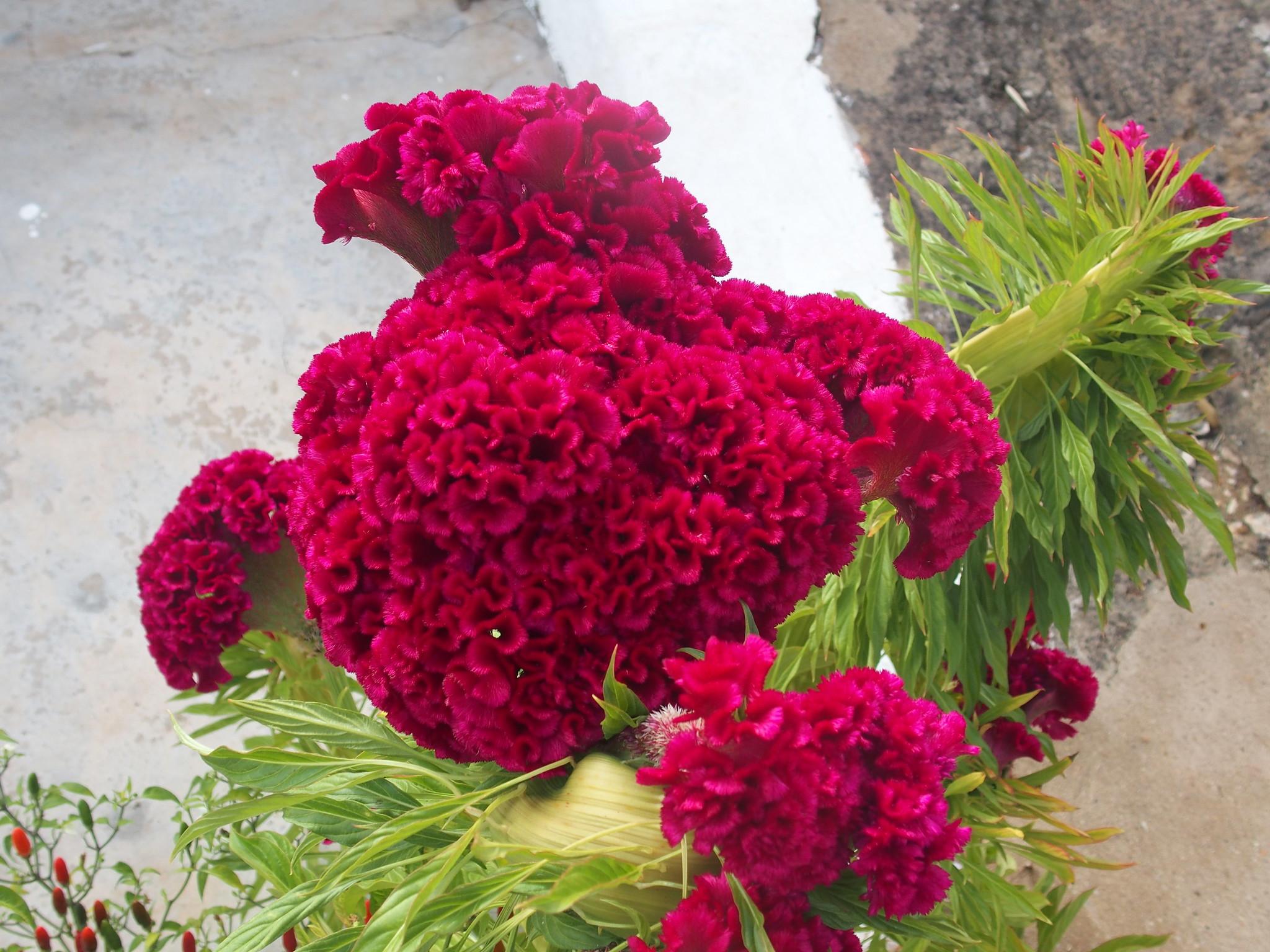 A11 Vacker okänd blomma