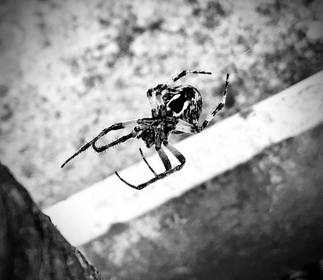 Spider job