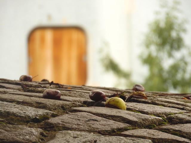 Marrons.. Chestnuts...