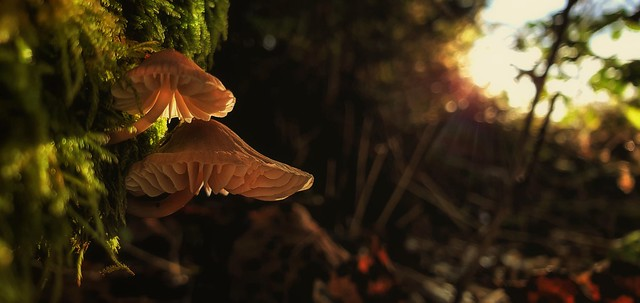 Autumn Dwellers