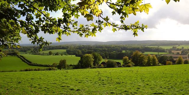 Surrey Hills Area of Outstanding Natural Beauty