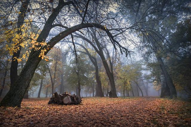 Fairytale Autumn Forest