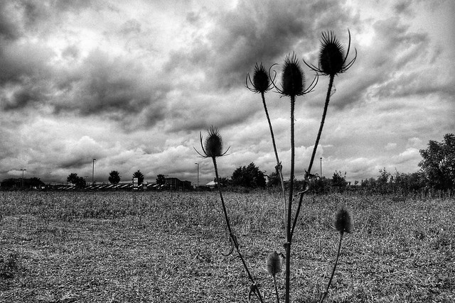 Field of Nothing