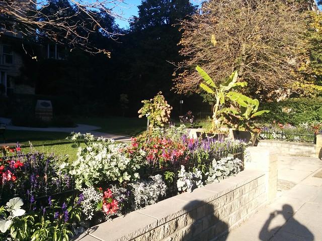 Garden in bright light, Paul Kane House Parkette #toronto #fall #autumn #gardens #churchandwellesley #wellesleystreeteast