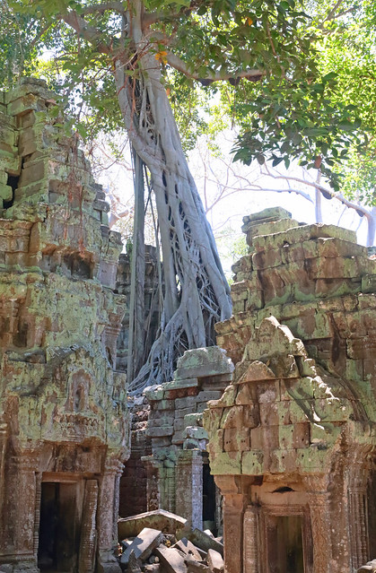 Roots Of Ta Prohm