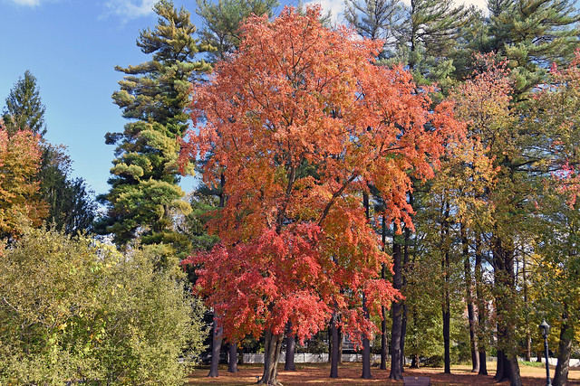 Picture Of 2019 Fall Foliage Season Taken At Wampus Brook Park In The Town Of North Castle, New York. Photo Taken Friday October 18, 2019
