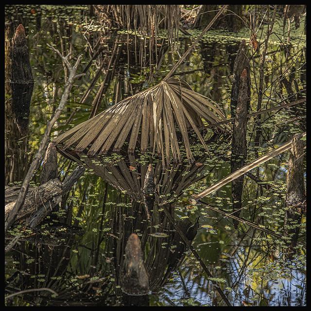 Lake Woodruff NWR #3 2019;Cypress Swamp