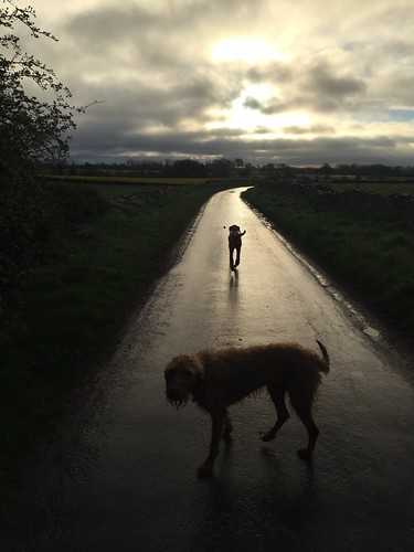road reflection dogs wet clouds rural sunrise vizsla lane iphone