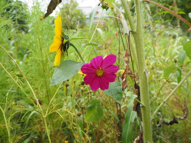 La prairie fleurie: un bon compromis !  - Jardin Botanique Bordeaux_P9090315