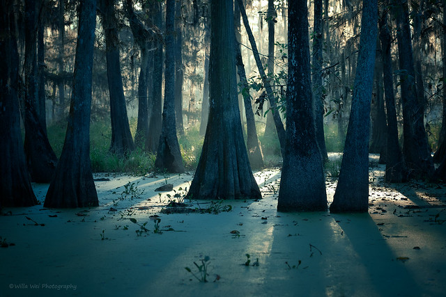 Mysterious Swamp