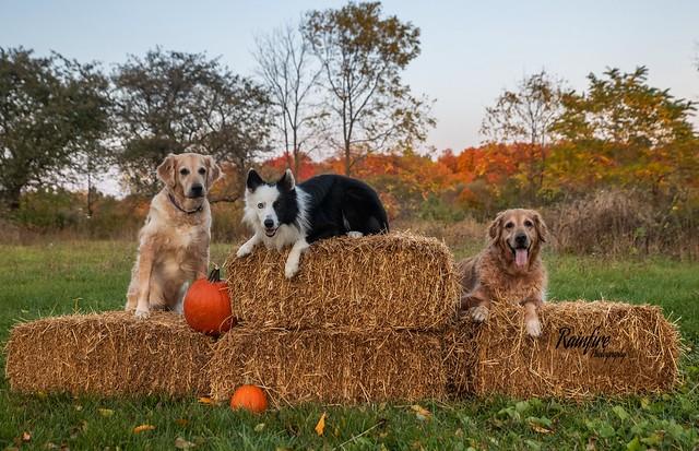 Halloween Pet Shoot!