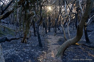 Colour of Australia (Bushfire) | by Tatters ✾