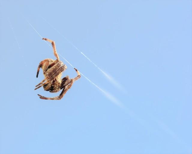 A tightrope tidbit