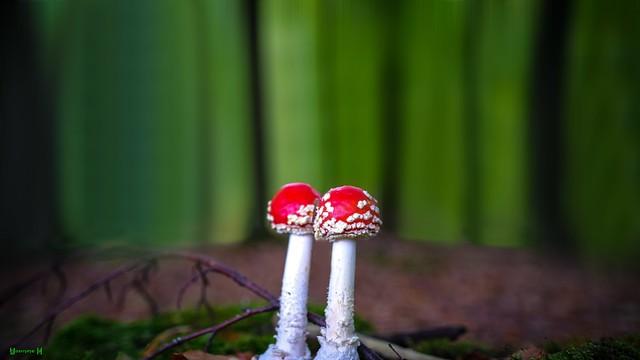 #Mushroom - 7574