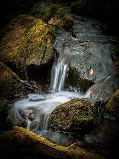 Waldviertler Bach im Herbst, ditch in autumn time, forest quater, Lower Austria