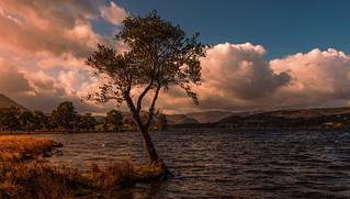 Lone Tree - Ullswater -Cumbria