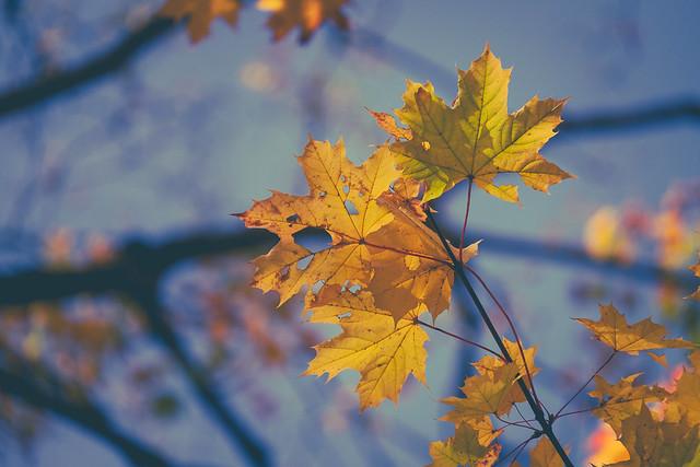 It's Autumn again