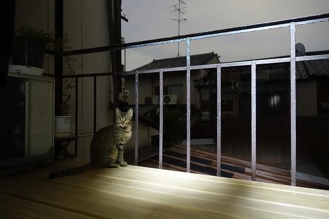 Today's Cat@2019-10-19