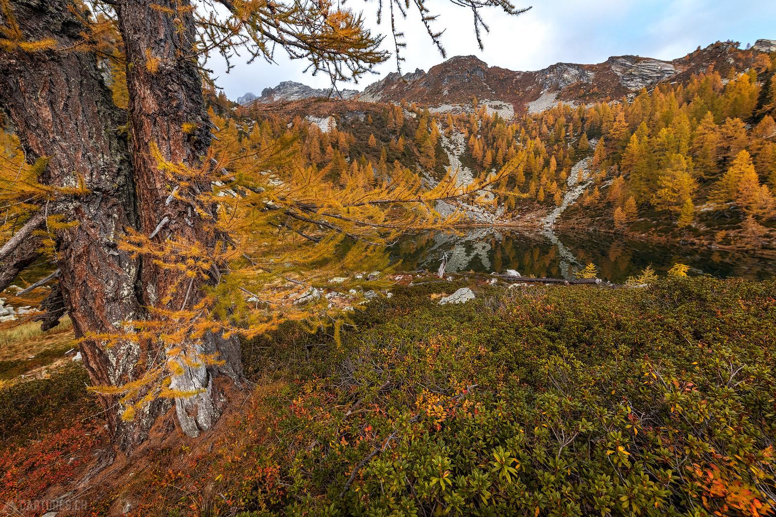 Larch trees - Lago dei Pozzöi