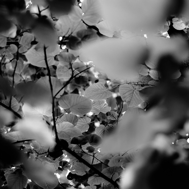 Up Through Trees 069
