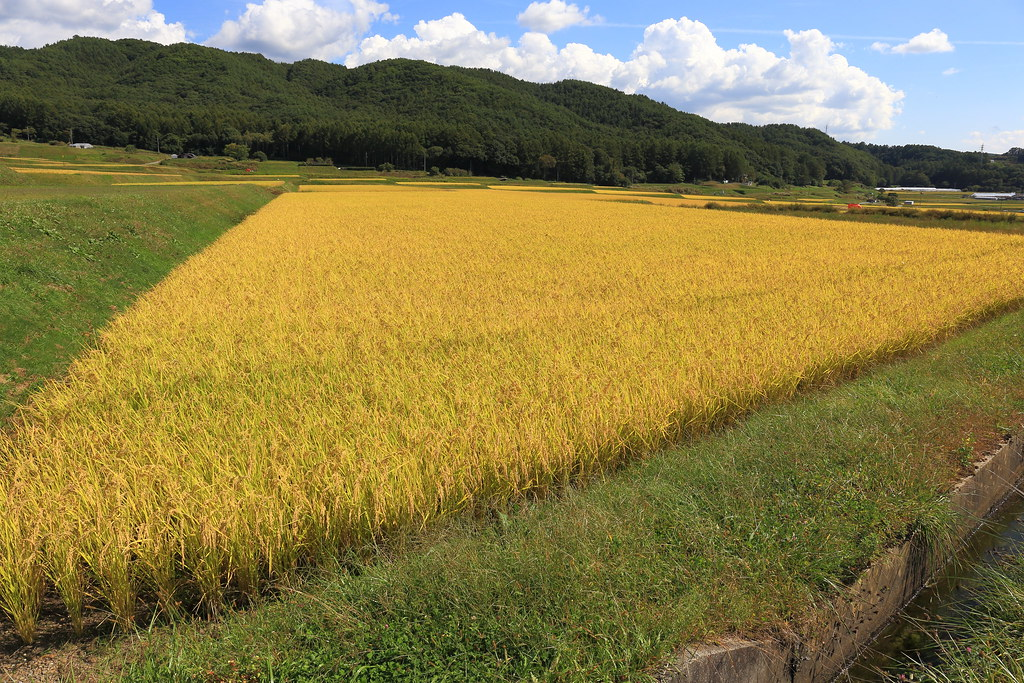 somewhere in Nagano prefecture