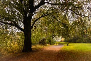 The Start of Autumn in Paddy Freeman's Park