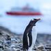 Antarctica-111127-1392