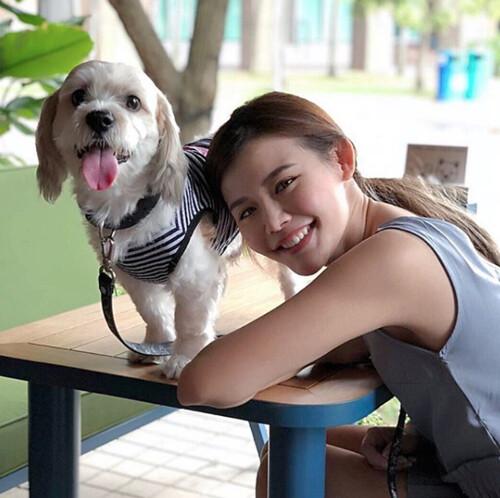 prestige pets insurance singapore